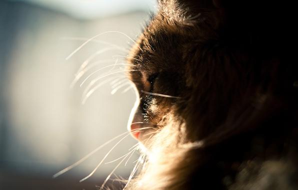 Картинка усы, солнце, пушистый, Кот, окно, спит