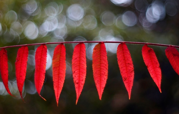 Картинка листья, макро, красный, фон, widescreen, обои, размытие, листик, wallpaper, листочки, листочек, широкоформатные, background, leaves, macro, …