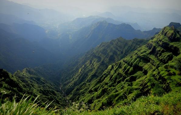 Картинка трава, цветы, горы, птицы, туман, ручей, ущелье
