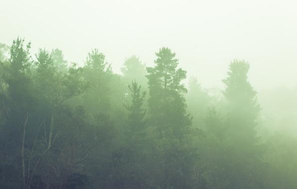 Скачивание изображения: солнце, туман, рассвет 302867 / разрешение: original / раздел: пейзажи / гудфонрф (goodfon)