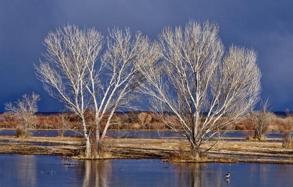 Картинка небо, вода, деревья, весна, половодье