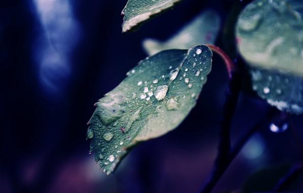 Картинка капли, макро, лист, роса