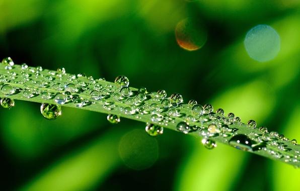 Картинка зелень, листья, вода, капли, макро, зеленый, роса, фон, green, widescreen, обои, wallpaper, листочки, листочек, широкоформатные, …