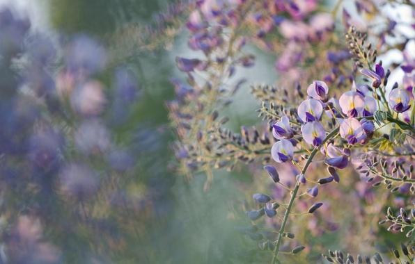 Картинка макро, цветы, дерево, весна, цветение, боке, акация