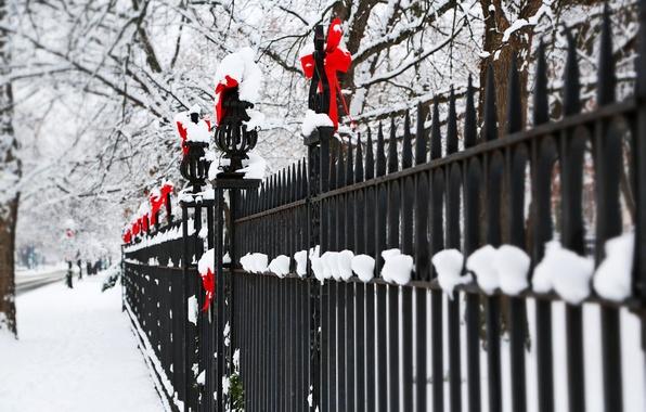 Картинка зима, снег, деревья, ветки, природа, забор, ограда, красные, прутья, бантики, праздники, банты, металлический