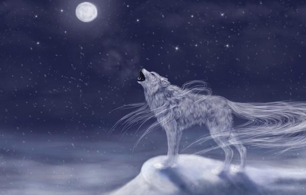 Картинка холод, небо, снег, ночь, животное, луна, волк, арт, воет, вхост