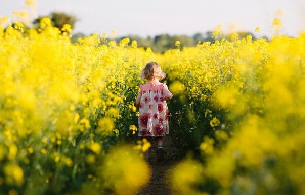 Картинка поле, настроение, девочка, рапс