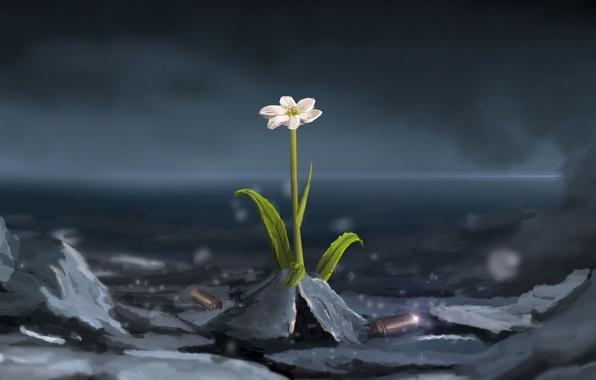 Картинка цветок, арт, гильзы