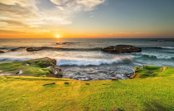 Картинка море, солнце, камни, рассвет, побережье, мох, чайка, горизонт, Калифорния, прибой, США