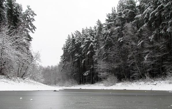 Картинка зима, лес, снег, природа, пруд, сосны