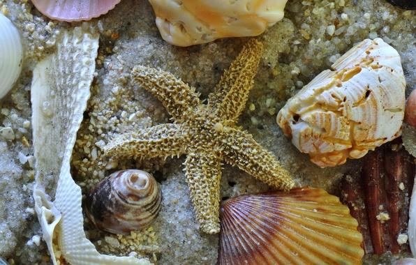 Картинка песок, море, звезда, дно, раковина, ракушки