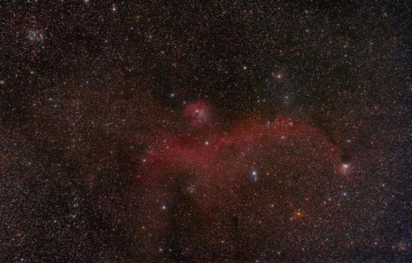 Картинка космос, звезды, Чайка, Туманность
