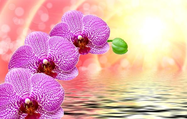 Картинка вода, солнце, капли, лучи, цветы, блики, фон, рябь, фиолетовые, орхидеи, боке, крупным планом