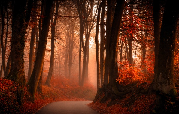 Картинка дорога, осень, лес, листья, деревья, туман, ветви