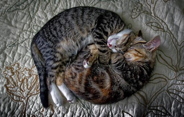 Картинка кошки, уют, дом