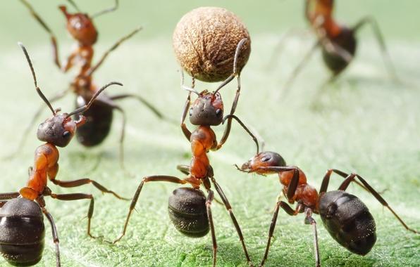 Картинка поле, макро, насекомые, игра, мяч, ситуация, муравьи, баскетбол, обои от lolita777