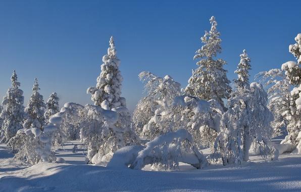 Картинка зима, лес, небо, снег, деревья, пейзаж, елка, ель, мороз