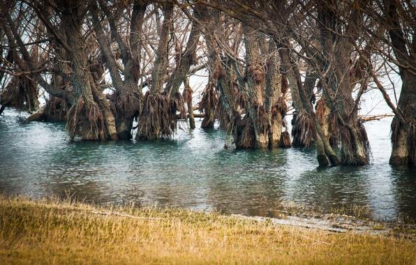 Картинка вода, деревья, весна, половодье