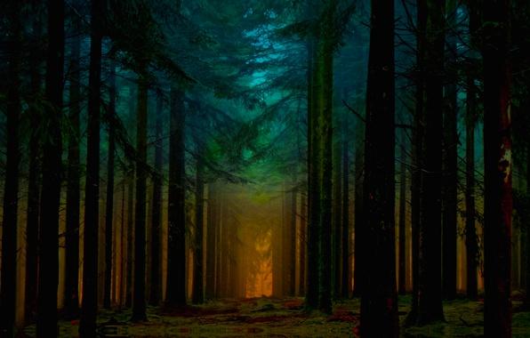 Картинка Orange, Beautiful, Blue, Fantastic, Sunrise, Forest, Ligth, Beam
