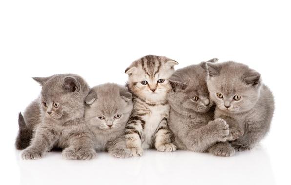 Картинка кошки, котята, малыши