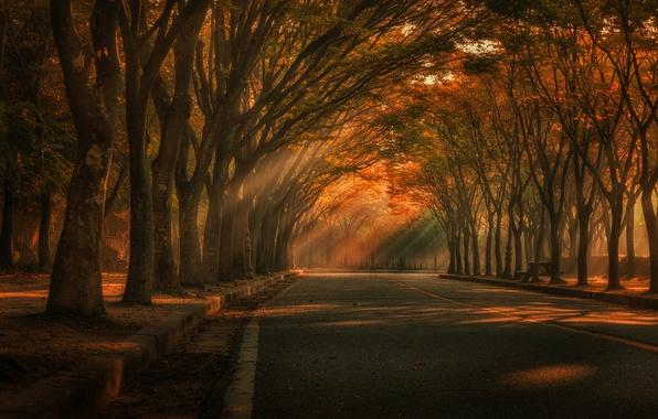 Фото обои осень, свет, парк, деревья, дорога