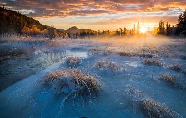 Картинка иней, солнце, лучи, свет, снег, природа, озеро, лёд, утро