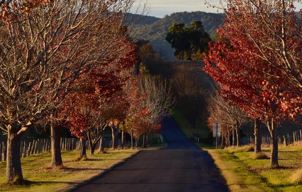Картинка дорога, деревья, утро