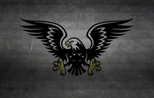 Картинка полосы, темный фон, птица, черно-белый, крылья, хищник, когти, ястреб, eagle, hawk