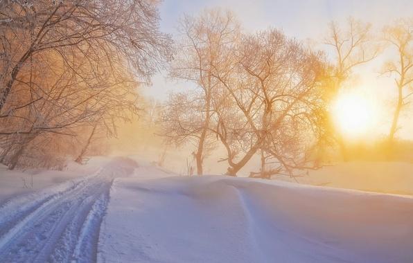 Картинка зима, свет, природа, туман, утро