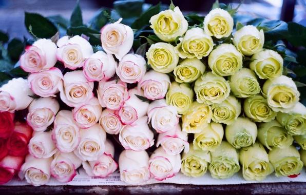 Картинка цветы, розы, много