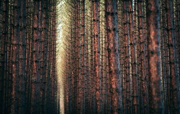 Картинка лес, деревья, пейзаж, ветки, природа, forest, trees, landscape, nature, 2560x1600, branches