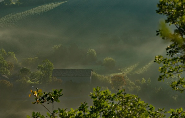 Картинка крыша, лучи, деревья, туман, дом, утро, склон