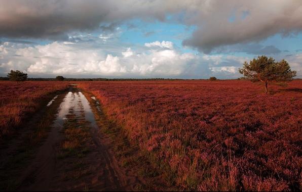 Картинка дорога, лужа, после дождя, пустошь, вересковая