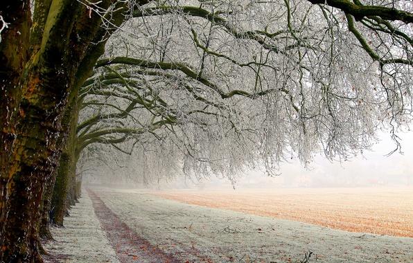 Картинка зима, поле, лес, снег, деревья, пейзаж, природа, путь, мороз, white, белые, forest, trees, field, landscape, …