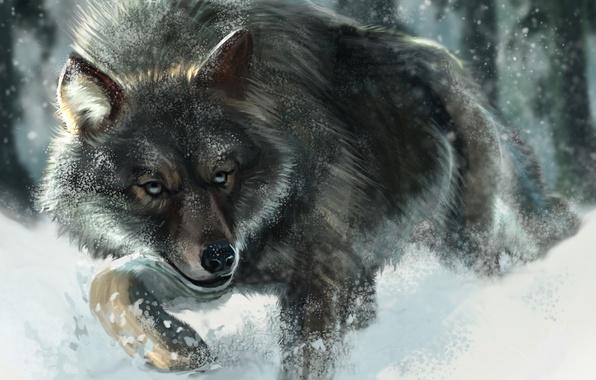 Фото обои Рисунок, Снег, Волк, Животные
