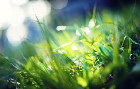 Картинка зелень, трава, макро, лучи, свет, фото, фон, green, обои, растения