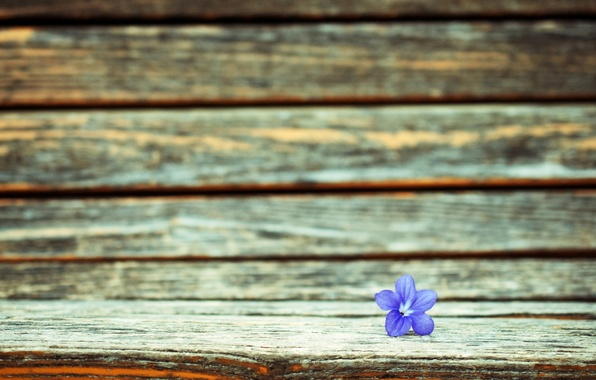 Картинка цветок, фиолетовый, макро, цветы, фон, widescreen, обои, wallpaper, flower, широкоформатные, background, полноэкранные, HD wallpapers, цветочек, …