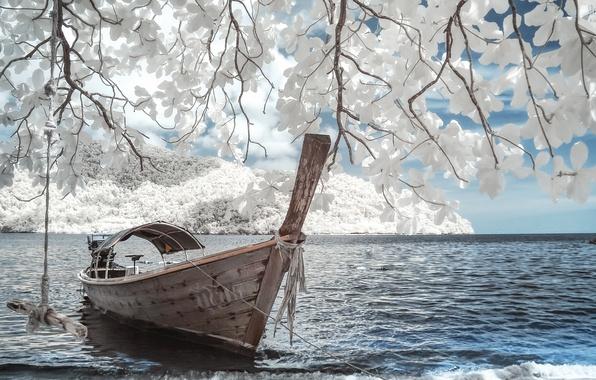 Фото обои уединение, лодка, магнолия, романтика, цветы