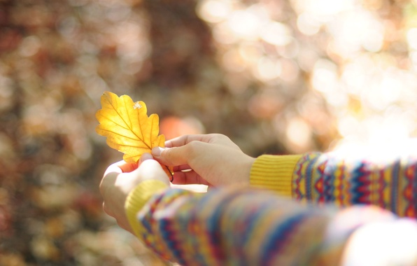 Картинка желтый, лист, листок