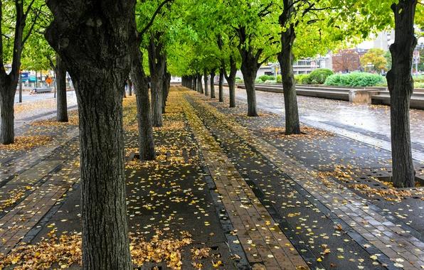 Фото стрит-парков