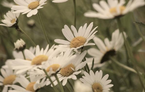 Картинка белый, цветы, желтый, зеленый, фон, widescreen, обои, лепестки, wallpaper, цветочки, flower, широкоформатные, background, полноэкранные, HD …
