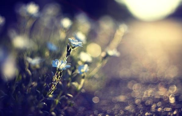 Картинка дорога, трава, солнце, макро, свет, цветы, природа, блики, камни, земля, растения, размытость, голубые, дорожка