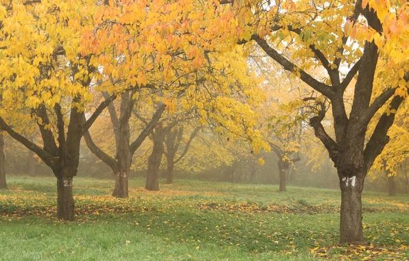 Картинка осень, деревья, природа, туман, парк, листва, Nature, trees, park, autumn, leaves, fog, fall, ноябрь, november