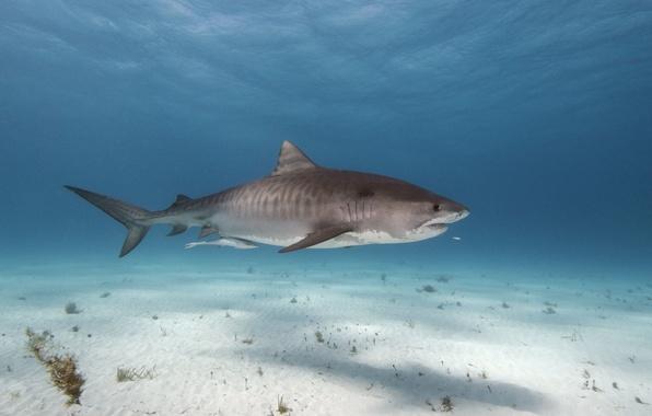 Картинка поверхность, тень, акула, морское дно