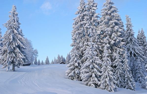 Картинка зима, дорога, небо, снег, деревья, следы, дом, забор