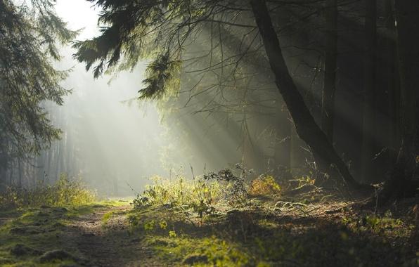 Картинка дорога, лес, лето, деревья, природа, красота, вечер, утро, дымка, тропинка, солнечные лучи