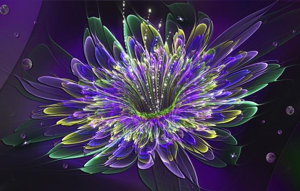 Картинка цветок, свет, обои, лепестки, объем