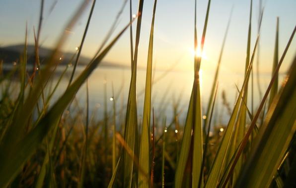 Картинка зелень, трава, солнце, лучи, счастье, свежесть, озеро, роса, тепло, рассвет, Байкал