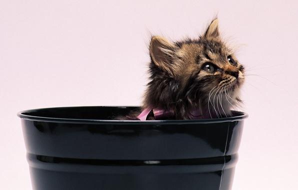 Картинка котёнок, бантик, ведёрко