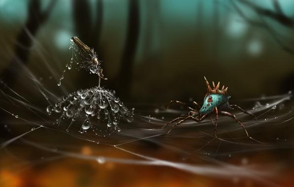 Картинка капли, одуванчик, паутина, паук, арт